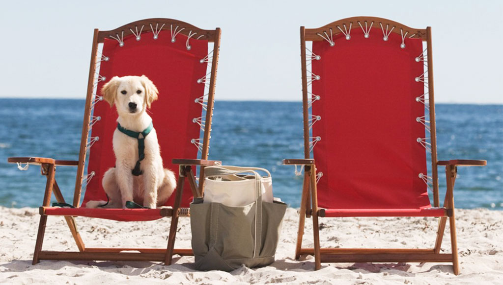 Take man's best friend along on your vacation