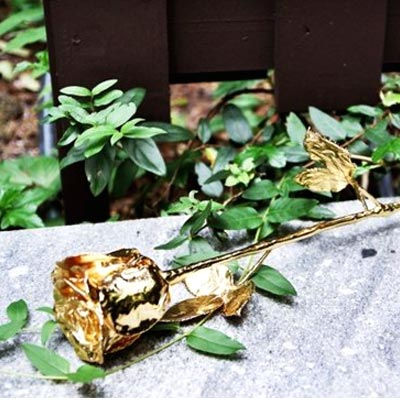 Gift a gold-plated rose this V-Day