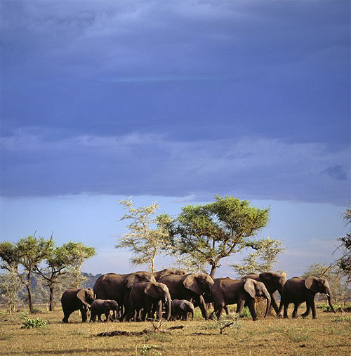 SAFARI IN STYLE   Revel in a combination of creature comforts and natural beauty at the Chobe National Park