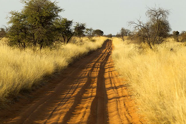 EXPLORING GALORE   The Kgalagadi Park is the ideal place for a rendezvous with brids of prey
